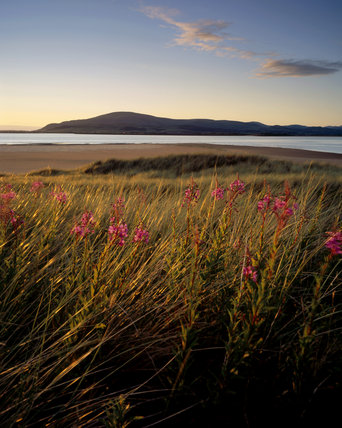 Willowherb and grasses blowing gently in the evening light at wandscale Haws , with the Duddon Estuary in the background and the hills of the Southern Lake District beyond