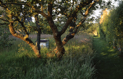 Bright sunlight in the orchard at Felbrigg Hall with a beehive in the distance in the long grass