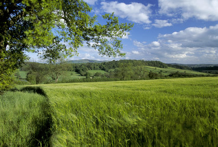A field of barley blowing in the wind on farmland at Wilderhope Manor Farm in remote countryside on the southern slope of Wenlock Edge