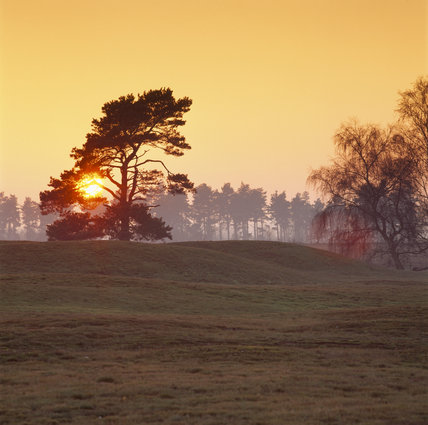 View of the sunset at Sutton Hoo with the sun just descending behind some trees
