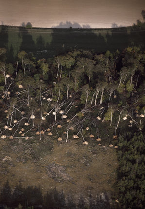 Weird pattern of fallen trees swept over by the strong winds of 1987 and 1990 at Bradenham