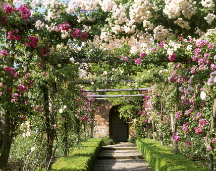 The Pergola Rose Walk In Walled Garden Polesden Lacey At