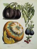 Botany / Charts
