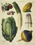 Pepper, asparagus a.o. / Album Vilmorin