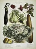 Aubergine, cucumber a.o./ Album Vilmorin