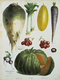 Sugar beet, leek a.o. / Album Vilmorin