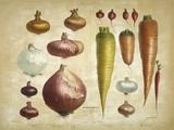 Onions, carrots a.o. / Album Vilmorin