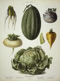 Kohlrabi, melon a.o. / Album Vilmorin