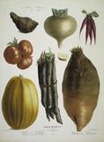 Topinambur, tomato a.o. / Album Vilmorin