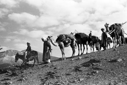 Kandari nomads migrating