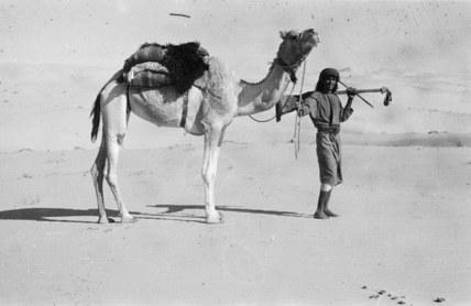 Muhammad al Auf with a camel