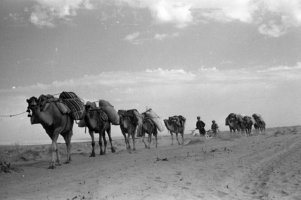 Kandari nomads with loaded camels