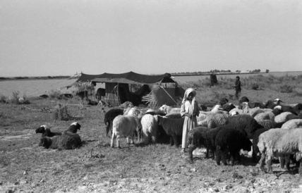 Bani Lam encampment in the Marshes