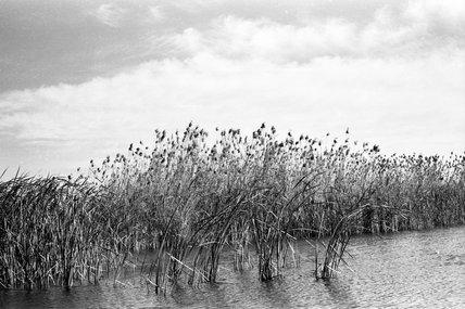 Vegetation in the Marshes