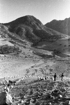 Bakhtiari nomads migrating