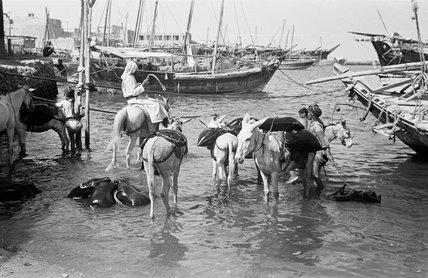 Kuwait harbour