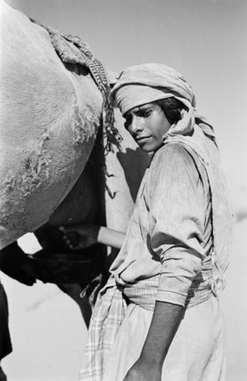 Rashid boy milking a camel