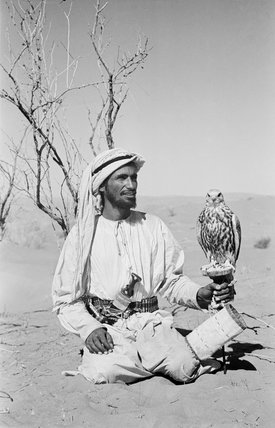 Arab falconer
