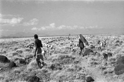 Rendille herders migrating