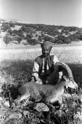 Kurdish man with an ibex