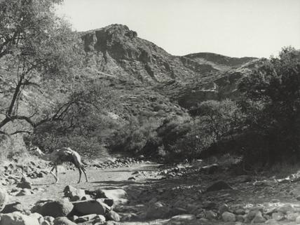 Jabal Meidob