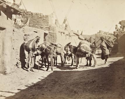 Zuni pack animals