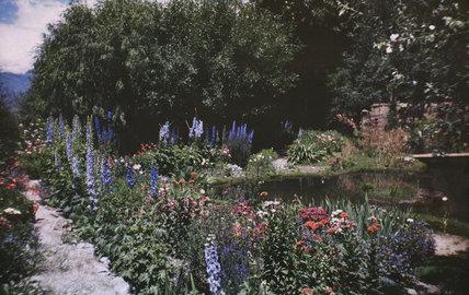 Flowers in the garden of Dekyi Lingka
