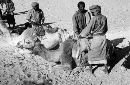 Portrait of four Bedouin men ...