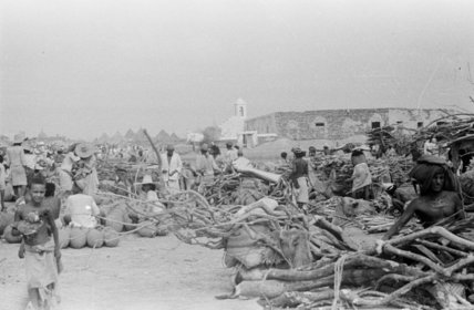 View of firewood traders and ...