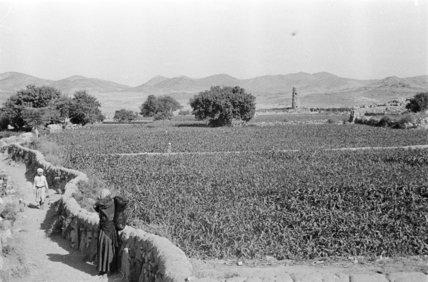 Landscape near Abha. A field ...