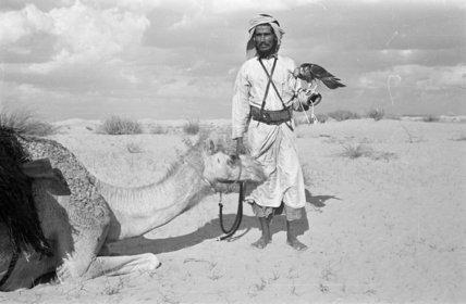Portrait of Musallim bin Al ...