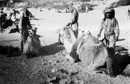Portrait of three Bedouin men ...