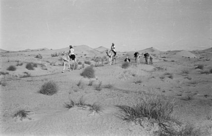 View of Sheikh Zayed bin ...