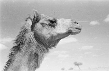 Close-up profile portrait of the ...