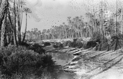 Palm grove at Ghayl bin ...