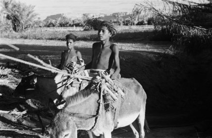 Two boys with donkeys near ...