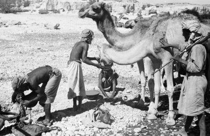 View of Mahra Bedouin watering ...