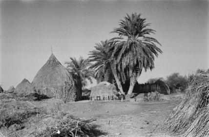 Huts and palm trees at ...