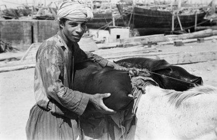 Portrait of a teenaged Arab ...