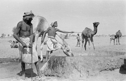 Portrait of Wahiba Bedouin with ...