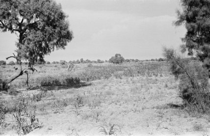 Landscape with tamarisk trees in ...