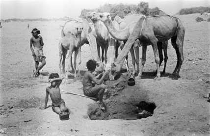 Bedouin watering camels at a ...