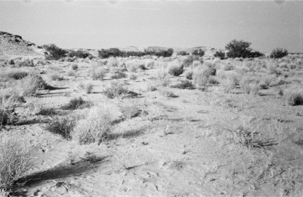 Steppe country with vegetation covering ...