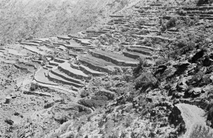 View of terraced fields stretching ...