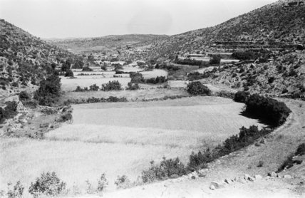 View of terraced cultivated fields ...