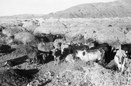 View of a herd of ...