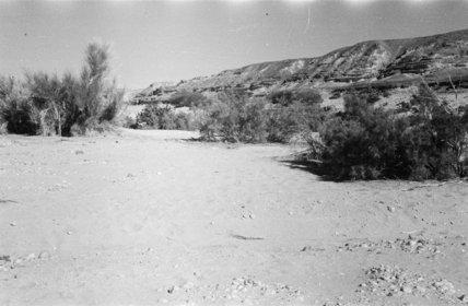 View of marakh and tamarisk ...