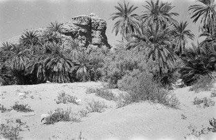 A palm grove at Min'ar. ...