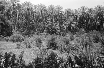 View of lush vegetation in ...