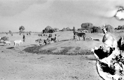 View of people watering donkeys ...